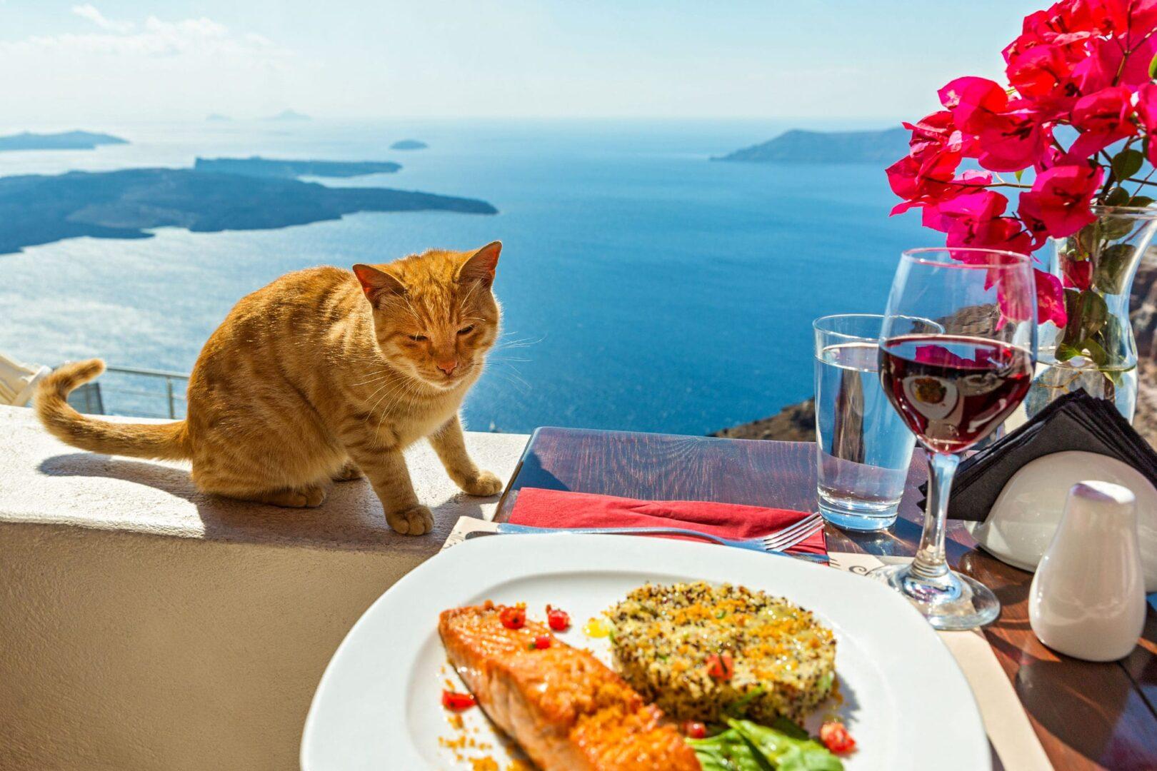 Обед с видом на море в Саторини
