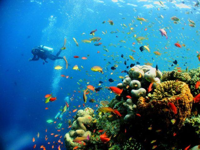 Дайвинг с борта мегаяхты на Карибах